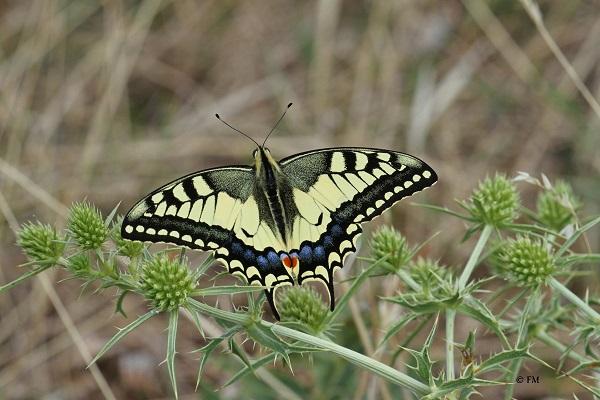 Atlas des papillons